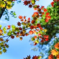 紅葉。秋の気配の画像
