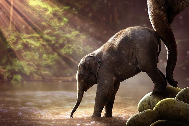 小僧に入水を促す親象
