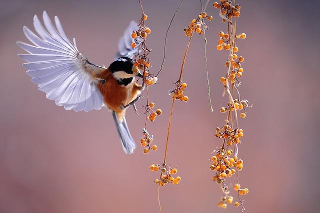 餌をついばむ小鳥