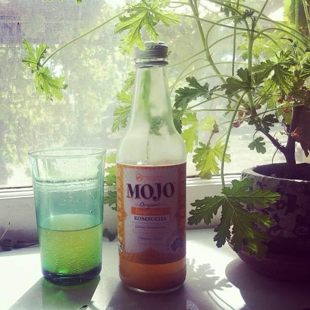 瓶に積められたMOJOのKombucha