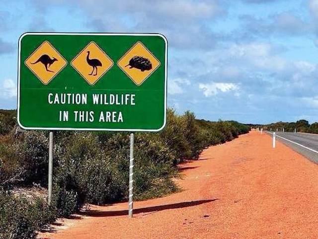野生動物を示す道路標識