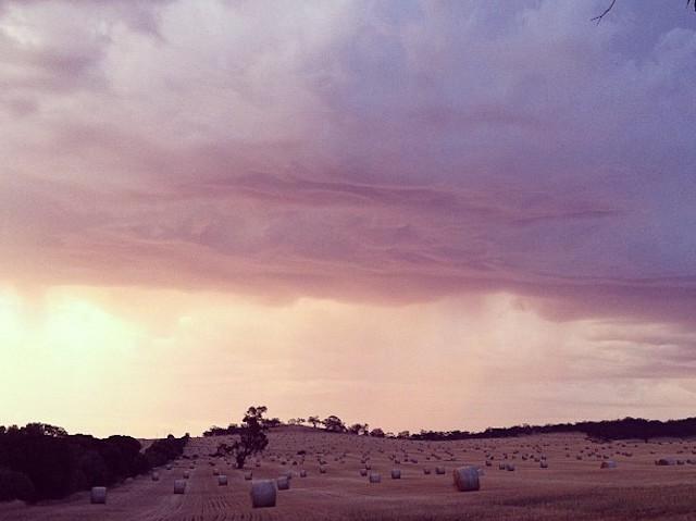 夕焼けになった農園と空